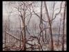 through-air-trees-and-deer-website-b
